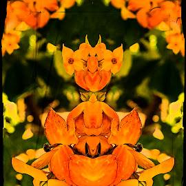 Flower Child by Sandy Friedkin - Digital Art Abstract ( reflections. orange, flowers )