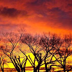 Dawn Trees by John Shelton - Uncategorized All Uncategorized ( desert, dawn, reno, silhouette, nevada, trees )