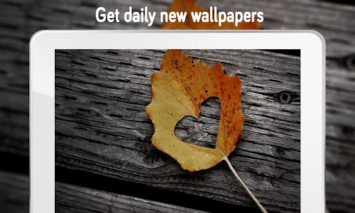 Love Wallpaper (4k) 1.0 screenshots 11