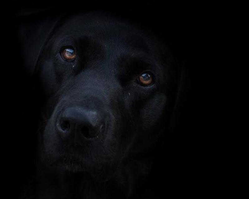 Black dog di utente cancellato