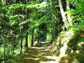 Photo: 04.W lesie na czarnym szlaku.