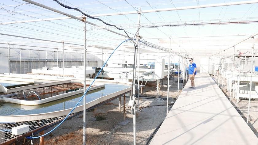 Producción de microalgas en la Estación Experimental de Cajamar.