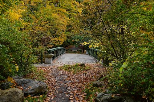 While walking - II by Adnan Kakazai - City,  Street & Park  City Parks ( autumn leaves, nikond750, travel, massachusetts, usa, wanderlust, nature, new england, berkshires, autumn, stockbridge, nature up close, adnankakazaiphotography, autumn colors, norman rockwell museum )