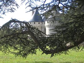 Photo: Le château de Chaumont-sur-Loire. vu à travers les branches d'un cèdre.