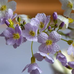 by Helena Jirasová - Flowers Flowers in the Wild ( dewy flowers, pool flowers )