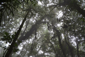 Photo: Monteverede Cloud Forest