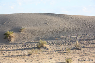 Photo: (Year 3) Day 37 - The First of the Sand Dunes