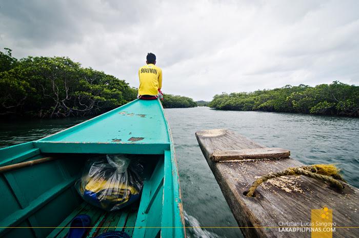 Palaui Island Tour Mangrove Tour
