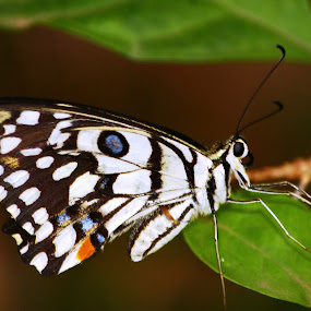 moth by Prakash Tantry - Animals Insects & Spiders ( nature, color, natural, moth, design,  )