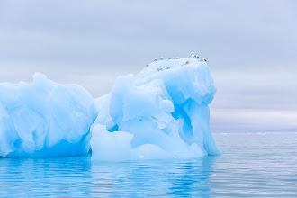 Photo: Kittiwakes on an iceberg