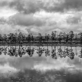 Reflections by Håkan Bley - Black & White Landscapes ( clouds, sweden, dalecarlia, nature, black and white, trees, reflections, lake, landscape, dalarna )