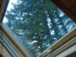 Photo: My view for three days. I lay on the bed and look up at the sky and the trees. Out along the McKenzie River in the Oregon forest.