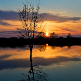 by Siniša Almaši - Nature Up Close Water ( clouds, water, up close, reflection, tree, nature, view, landscape, light, sun, colours,  )
