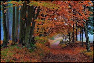 Photo: Herfst. Foto: De Groene Wereld