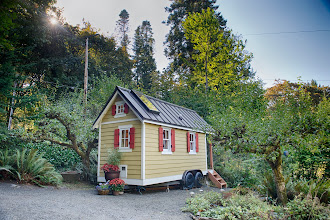 Photo: Tall firs, maples & apple trees surround the house.