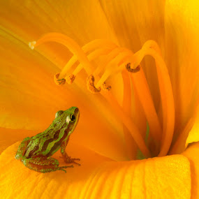 Mesmerized by Tom Vogt - Nature Up Close Flowers - 2011-2013 ( frog, yellow, not photoshopped!, flower, world_is_yellow, , backyardmarvels, amazingworlds, Backyard, insects, reptiles, living creatures, green, colors, daily life, color, landscape, portrait, object, filter forge )