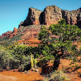 Sedona Vista by Dave Walters - Landscapes Deserts ( canon rebel, az, sedona, red rocks, landscape, colors )