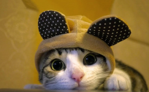 collection of cute cat screenshot