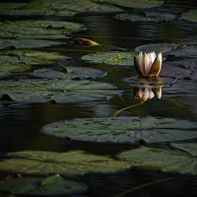 by Uroš Florjančič - Nature Up Close Flowers - 2011-2013