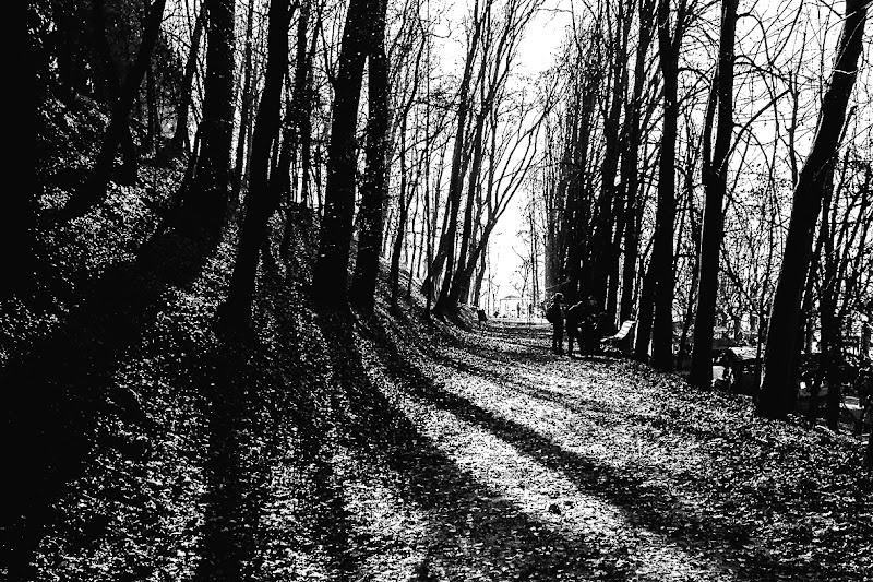 Luci e ombre nel bosco di Ro51