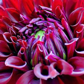 by Kisha Webb - Flowers Single Flower