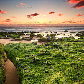 Greeny sunset by Hugo Marques - Landscapes Waterscapes ( color, waterscape, sunset, seascape )