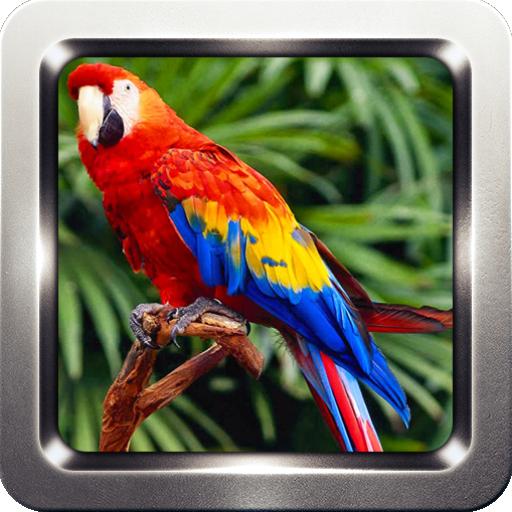 Parrot Bird Sounds
