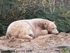 Photo: Ist noch zu frueh zum Aufstehen, meint Knut ;-)