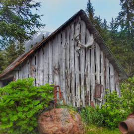 Old Goldminers Cabin by Patricia Phillips - Buildings & Architecture Other Exteriors ( alaska girdwood crow creek cabin )