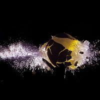 big bang : sia la luce e la luce fù di