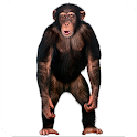 Real Talking Monkey icon