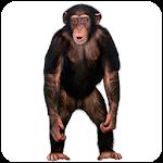 Real Talking Monkey Icon