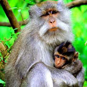 MY BABY AND ME by Rizal Marsa - Animals Other (  )