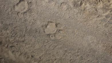 Photo: Tigeralarm