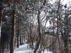 植林との境界を進む