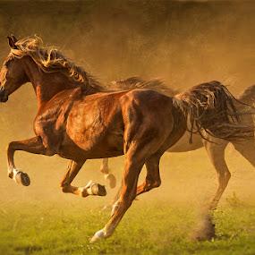 run by Mathias Ahrens - Animals Horses