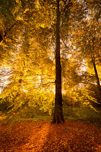 Photo: Golden Tree
