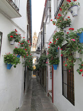 """Photo: This was one of the most well-known places in Córdoba known as """"la calleja de las flores"""" (the alley of flowers). A tower from La Mezquita (the Great Mosque) can be seen in the back of this alley. This mosque is also one of the most visited places in Córdoba."""