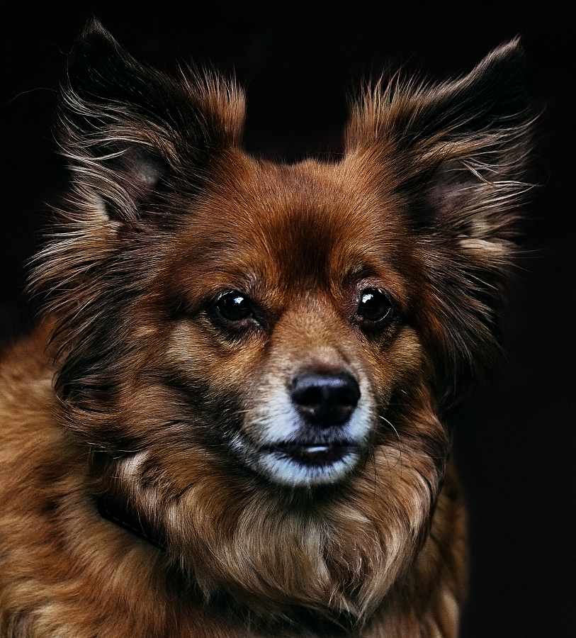 by Denis Los - Animals - Dogs Portraits ( animals, dogs, portraits )