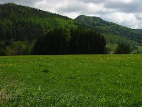 Photo: Wiosenna zieleń - aż się chce żyć!