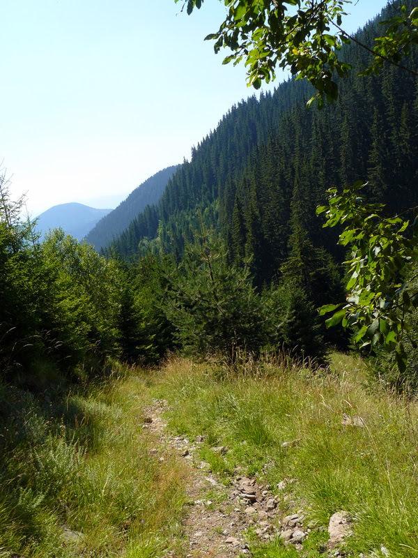 Горска пътека в Родопите