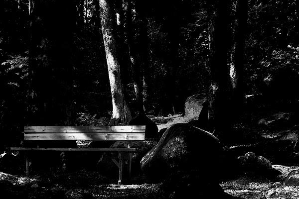 La panchina nel bosco..... di DanteS