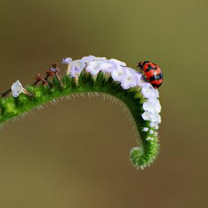 bug-69.jpg