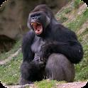 Gorilla Pack 2 Live Wallpaper icon