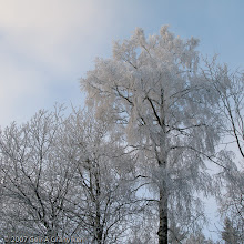 Photo: Rime frost