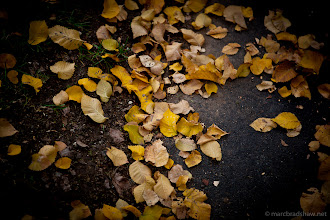 Photo: Leaves