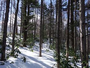 硬い雪を探しながら進む