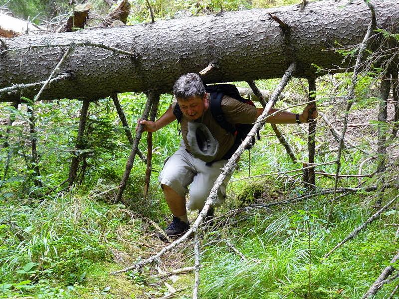 Паднало дърво в Родопите