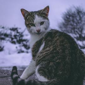 Stranger by Paul Voie - Animals - Cats Portraits ( close up, cat, bokeh, winter, portrait )