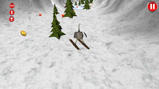Ostrich Winter Sport